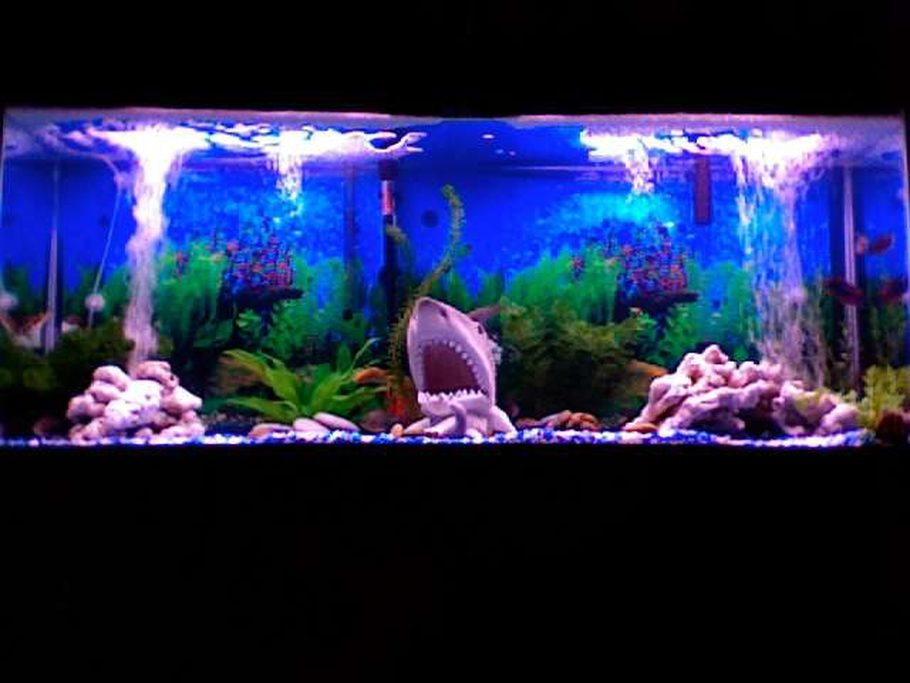 Kredible 39 s freshwater tanks details and photos photo for Black light for fish tank