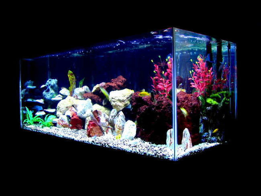 Gauravmi570 39 s freshwater tanks photo id 10866 full for African cichlid tank decoration