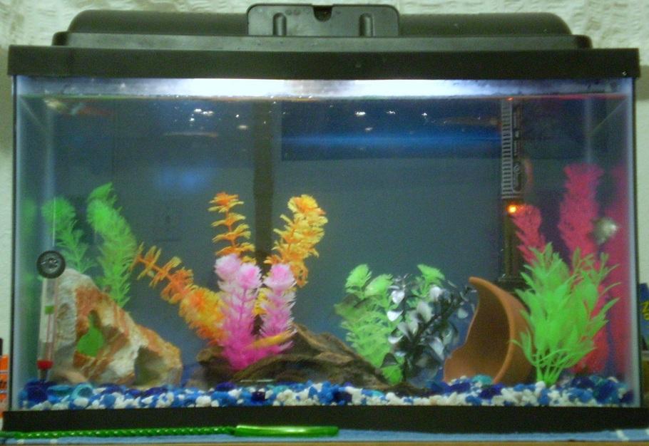Blubunny2005 39 s freshwater tanks photo id 13655 full for 10 gallon fish tank cover