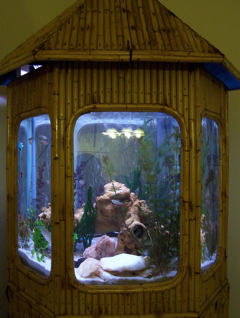 bamboo in fish tanks images