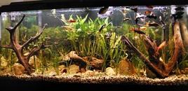 55 Gallon Tank Photo Taken 6162008