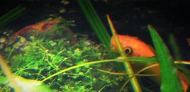 Taken 3 Feb 08 Check out my websitehttpwwwdanmansturfcom