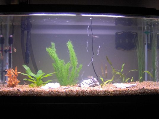 Rosariocamaro 39 s planted tanks photo id 5669 full for 220 gallon fish tank