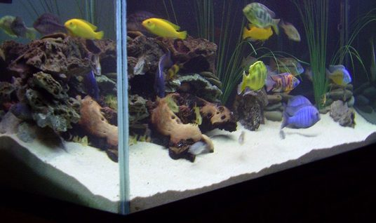 Gpowell1 39 s freshwater tanks photo id 36621 full for Aquarium angle