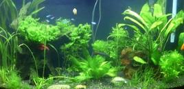 Planted tank 110507