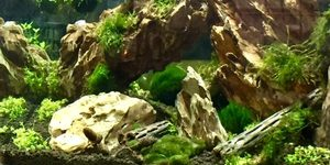 first aquascape Dragon stone weeping and flame moss Planning on adding shrimp