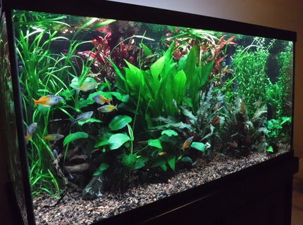 120 gallon with Co2