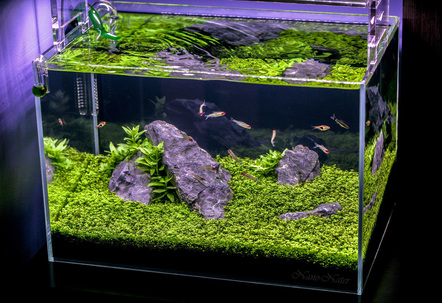 10 Gallons Started April 1rst 2015Date of Shot June 13th 2015 This shot shows the Aquarium as if you were viewing it in person