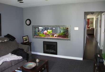 180 gallon aquarium built into living room wall it is open on both side so I can enjoy the fish in the office as well