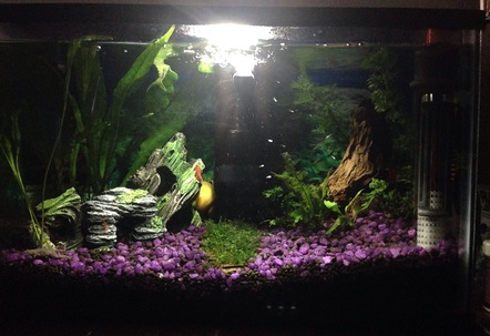 First fresh water planted tank