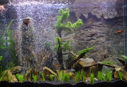 Iwagumi woodstone and plants with a 3d rock background redmoor bogwood and weeping moss tree Christmas moss mountain and a homebuilt sand waterfall