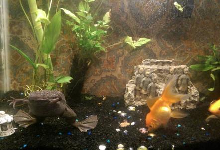 My 30 gallon Terracotta Warriors Zen aquarium