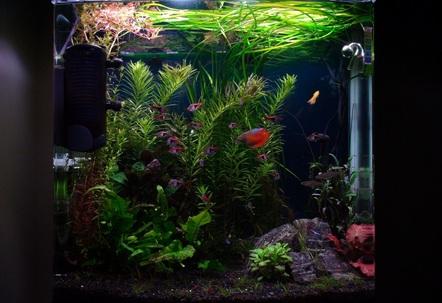 My updated  2 foot planted aquarium