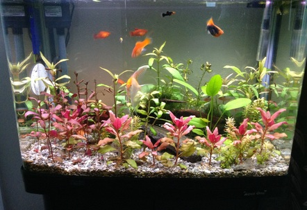 Planted tank about 8 species of fish and plants been running about 56 months