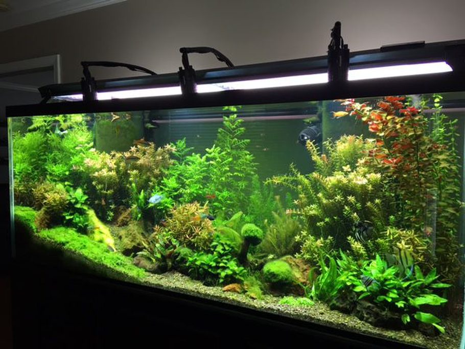 Most beautiful planted tanks 2016 for Freshwater fish tank plants