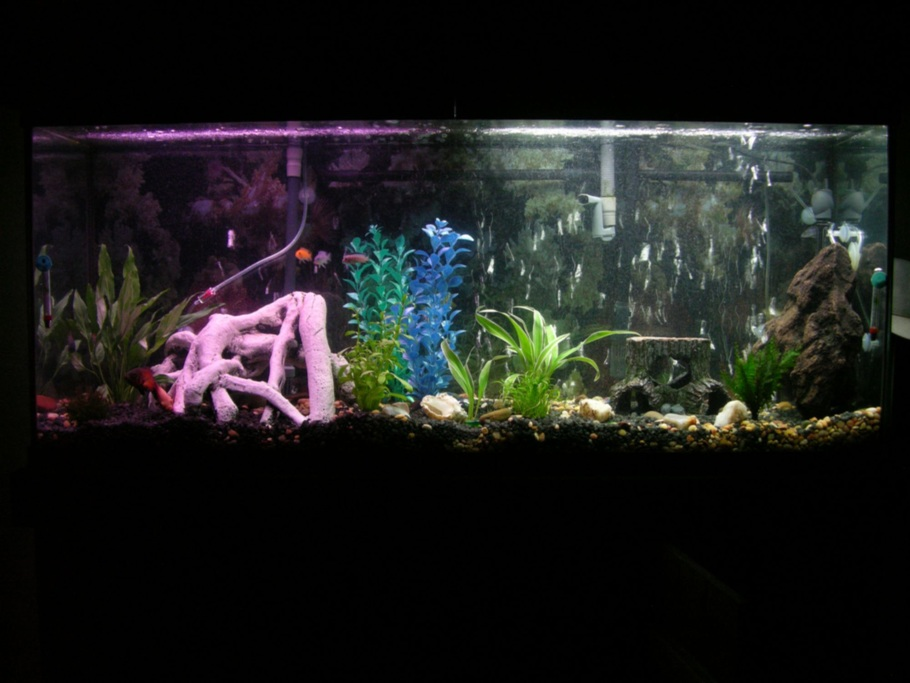 Kdizzle3312 39 s planted tanks photo id 12985 full for Is fish bad for you