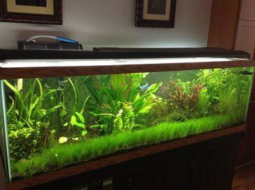 There is nothing more beautiful than a healthy, thriving planted freshwater tank.