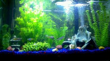 Using Driftwood And Live Plants In The Freshwater Tank