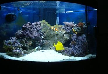 How to Deal with Marine Ich in the Saltwater Aquarium