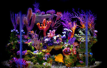 Reef Aquariums: Is Bigger Really Better?