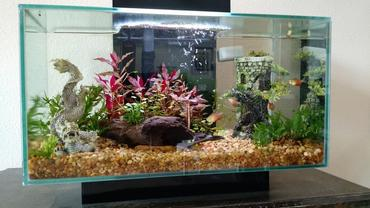 Tips for Protecting Your Aquarium Against High Summer Temperatures