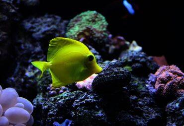 What You Need to Know About pH in Marine Aquariums