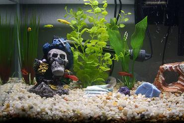 What Every Aquarium Hobbyist Should Know About Livebearers