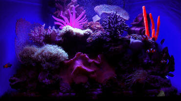 Saltwater Aquarium Lighting and Heating