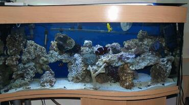 Saltwater Aquarium Filtration