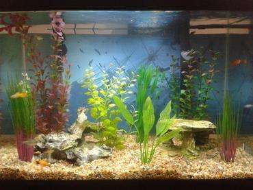 Acclimating Fish - Drip Method