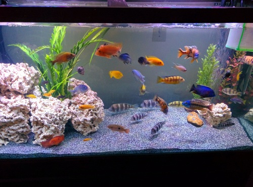How to keep your tank safe during a power outage for How much is a fish tank