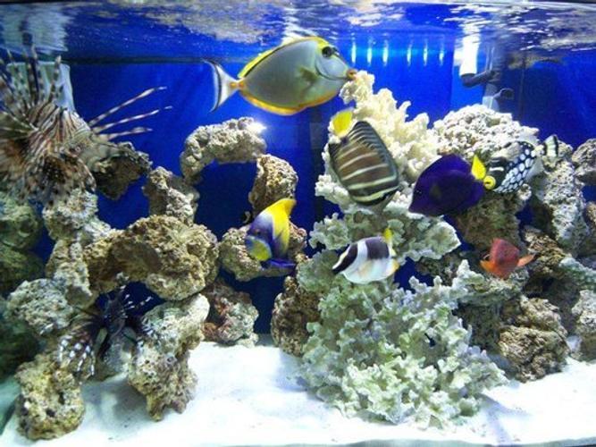 Saltwater versus Freshwater Aquariums