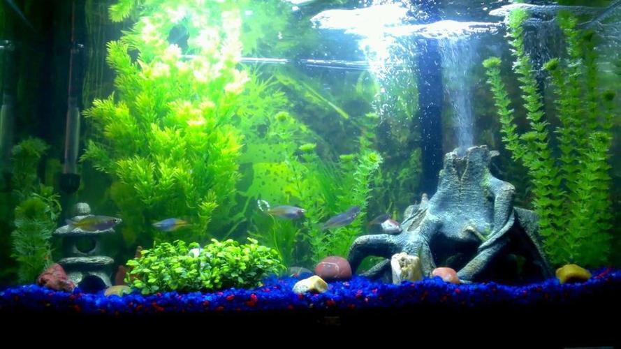 Handy Aquarium Accessories and Devices