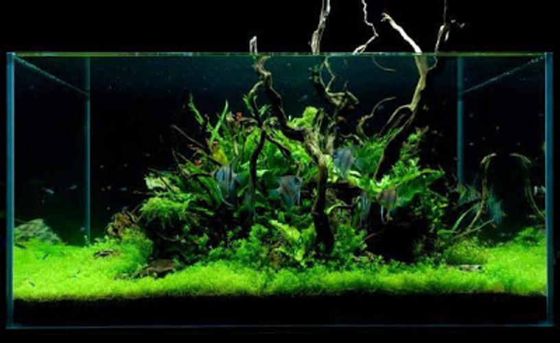 Tips for Aquascaping a Tank for Large Freshwater Fish