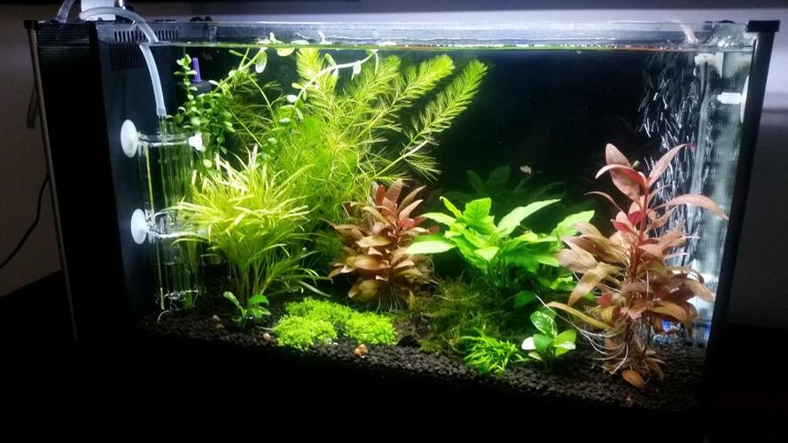 Tips for Rooting, Pruning, and Propagating Live Aquarium Plants