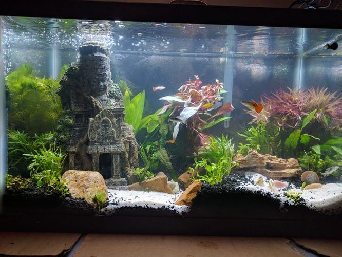 Spring Cleaning: How to Clean and Give Your Old Tank New Life