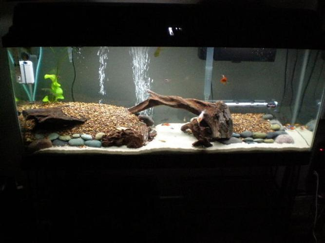 All about tropical fish tanks for Arowana tank decoration