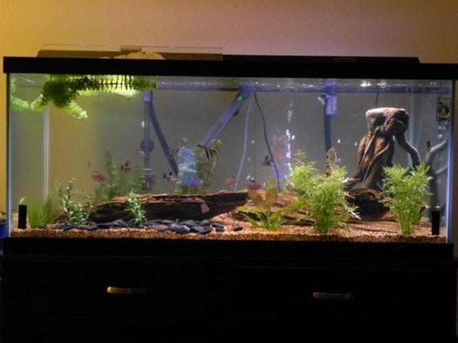 The Process Of Cycling A Fish Tank Ratemyfishtank Com