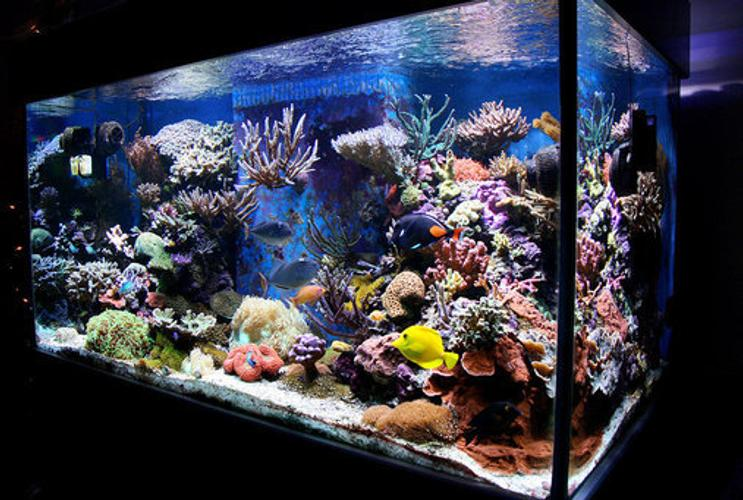 Reef aquariums for Saltwater fish tank