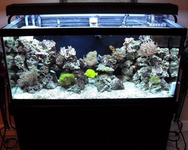Creating an Aquascape and Choosing Fish