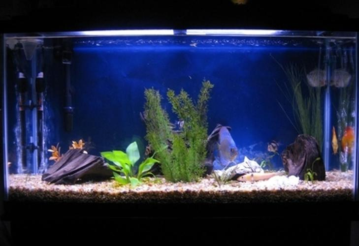 Choosing the Right Filtration System for Your Aquarium