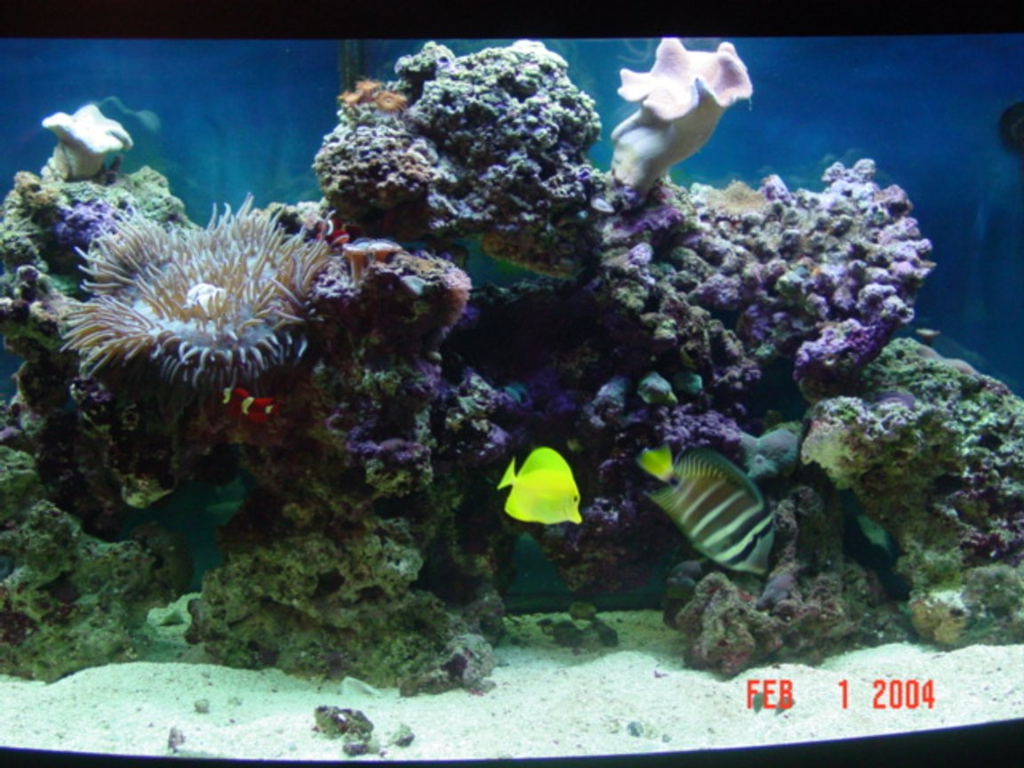 72 gallons reef tank (mostly live coral and fish)