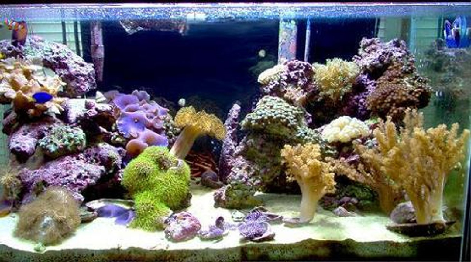 reef tank (mostly live coral and fish) - 40 gal salt (soon to be reef), 45 gal fresh, 29 gal salt fish only