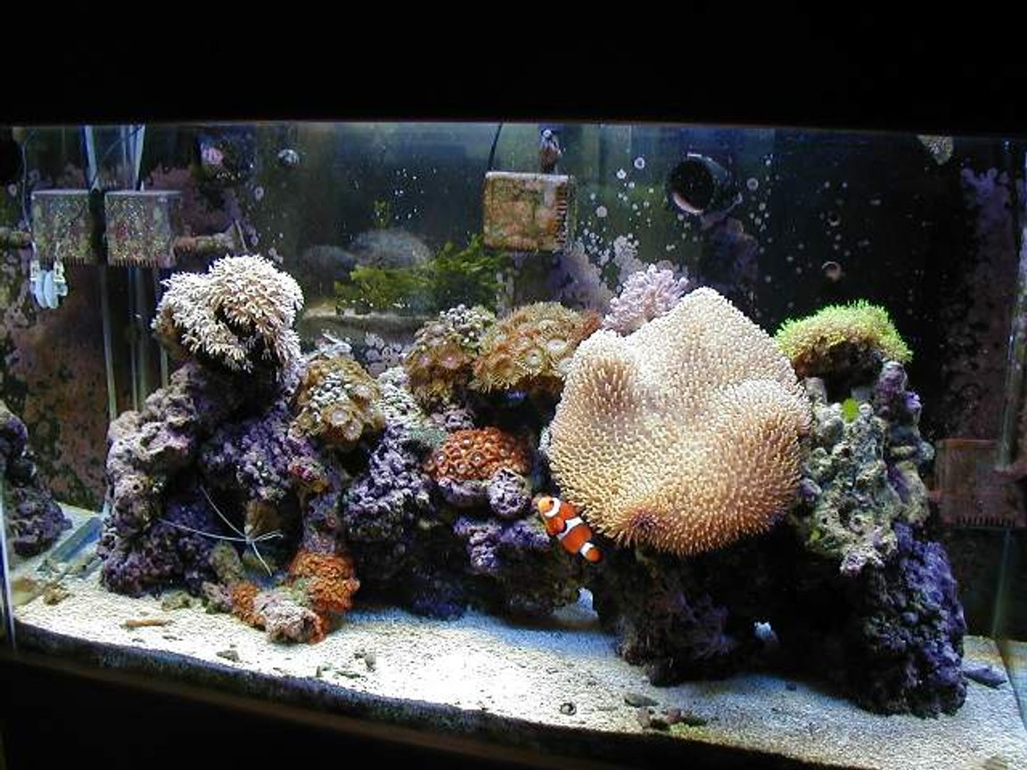 reef tank (mostly live coral and fish) - 29 gallon reef