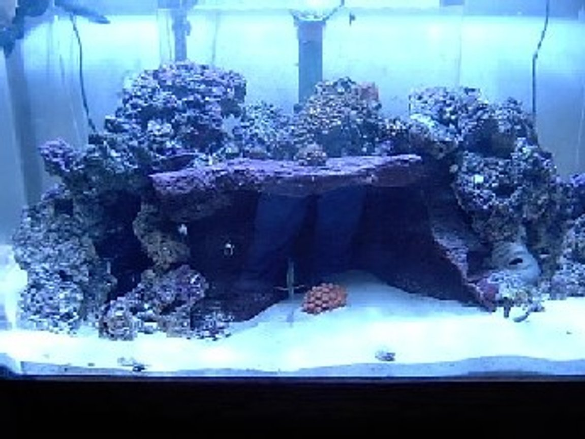 reef tank (mostly live coral and fish) - 130 custom built 1-250w MH w/XM 20k