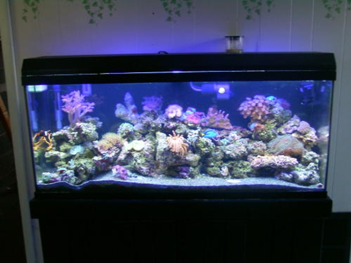 reef tank (mostly live coral and fish) - 55 gal reef tank