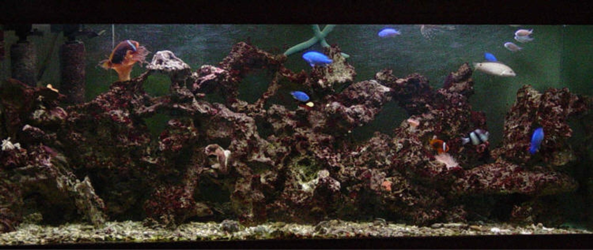 reef tank (mostly live coral and fish) - 100 Gal salt water tank.