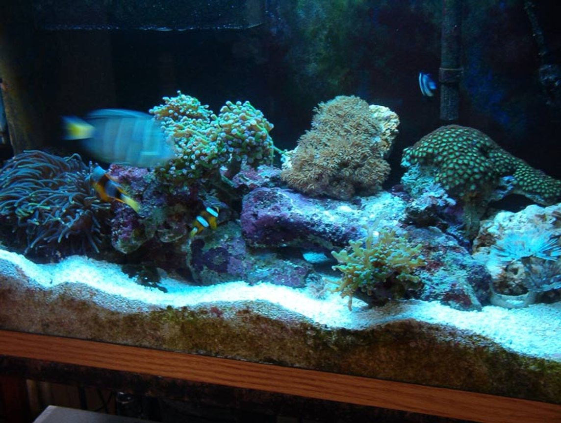 reef tank (mostly live coral and fish) - 29 gallon reef tank. 2-55 watt helios power compact, excalibur skimmer.