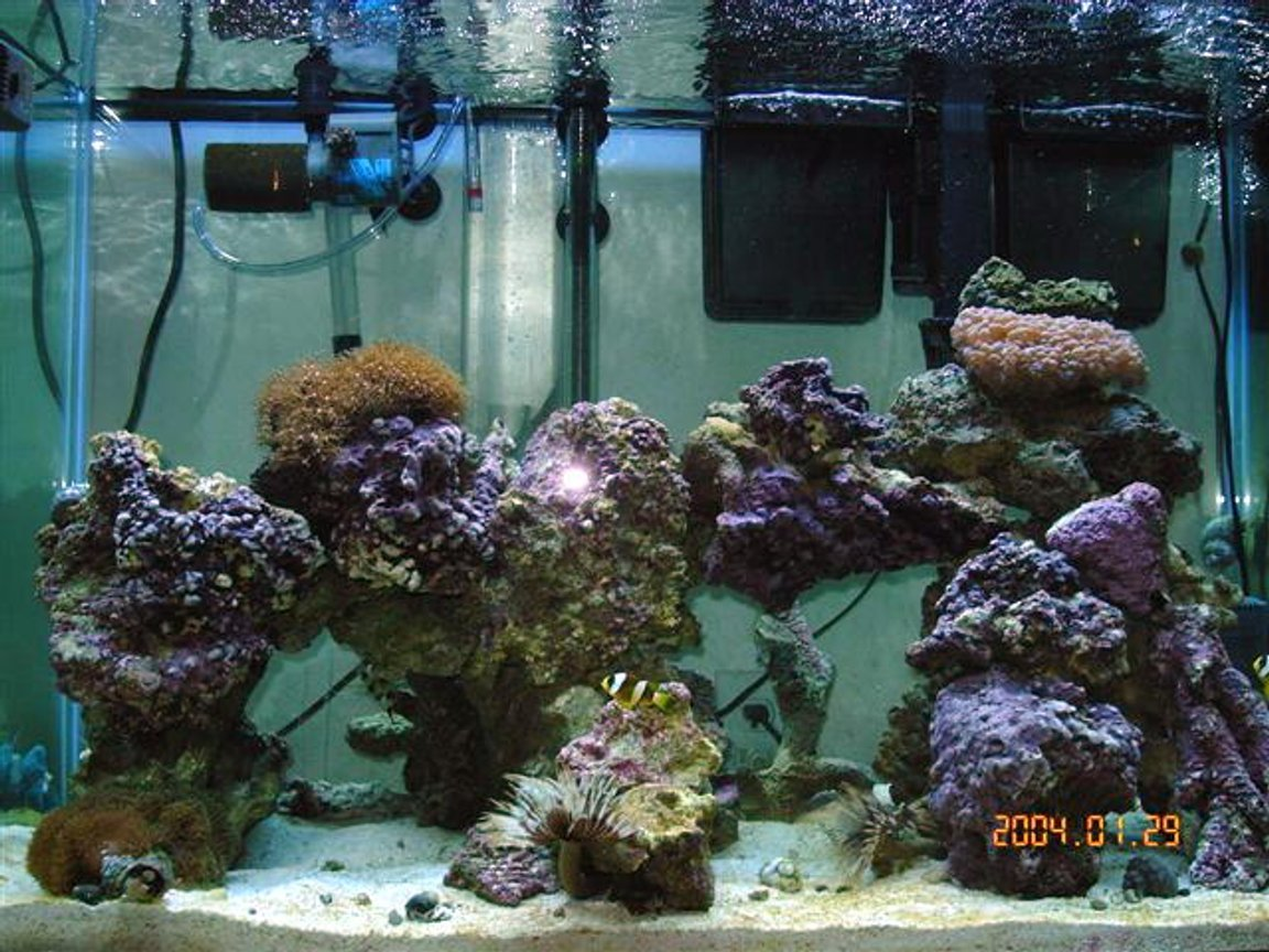 "reef tank (mostly live coral and fish) - 65 gallon tank with shrimp: banded, fire, skunk, 2 soft coral, 1 hard coral, 60lbs live rock 3"" sand bed, 5 snails, 10-12 crabs, brittle star, scallop, 3 feather dusters, purple tipped anenome, 2 cucumbers, flame angel, purple firefish, 2 clark clowns, 1 bi-color blenny, 1 purple starfish."