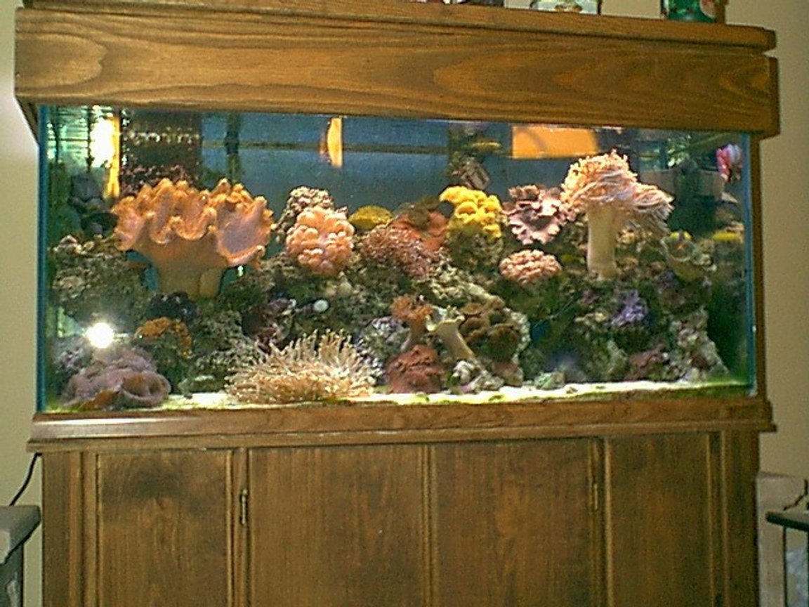 75 gallons reef tank (mostly live coral and fish) - 75 gal reef